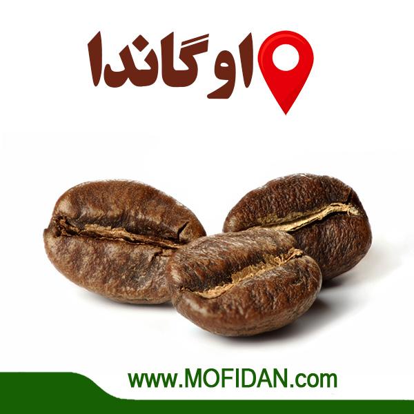 دانه-قهوه-اوگاندا-عربیکا