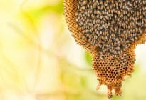 honey-bee-comb-beehive_1200