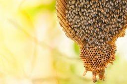 honey-bee-comb-beehive_1200