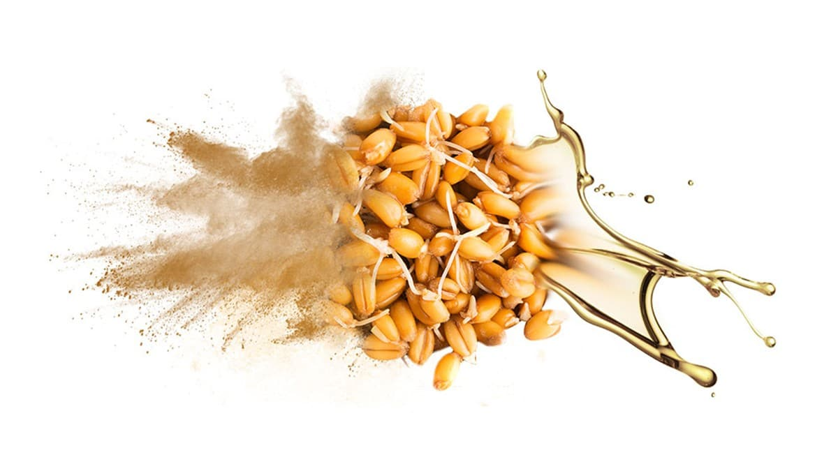 wheat-sprouts-weblog