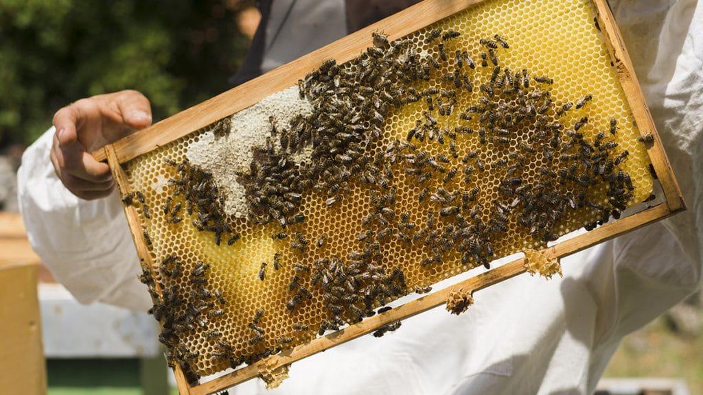 دانستنیهای عسل طبیعی