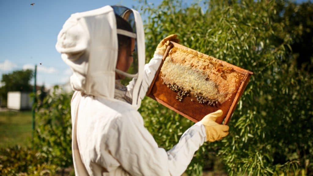 عسل رسیده چیست