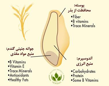 جنین گندم - Wheat germ