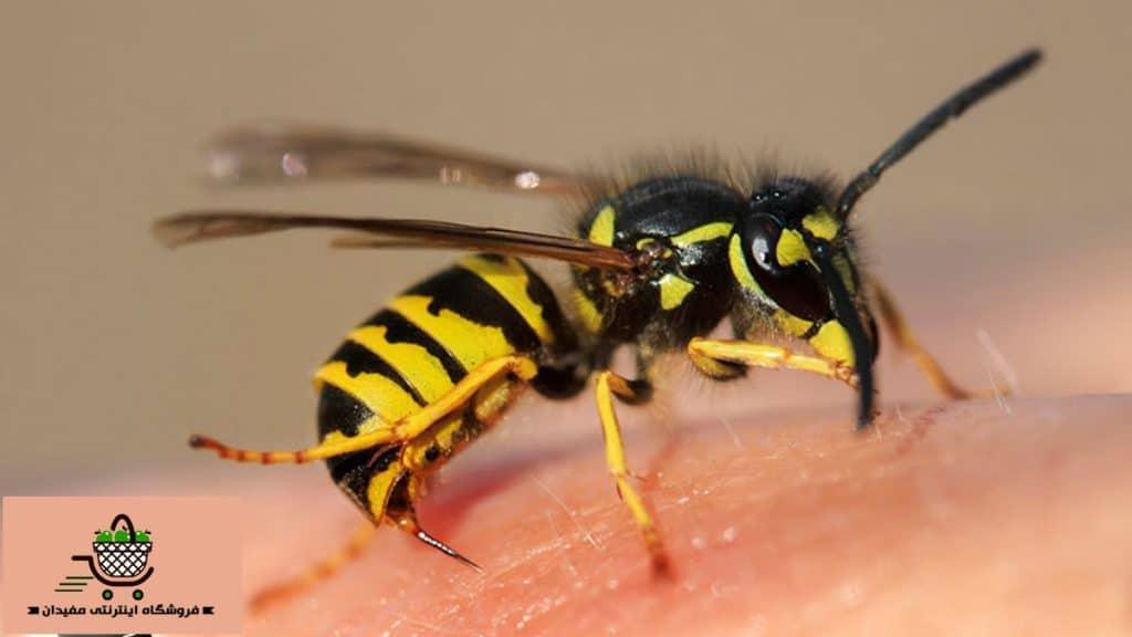 درمان نیش زنبور زرد