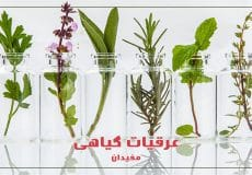 Botanical-Extracts