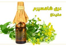 tanacetum-balsamita