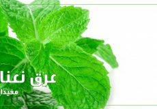 Mint-extract