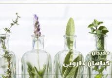 medicinal-plants-001