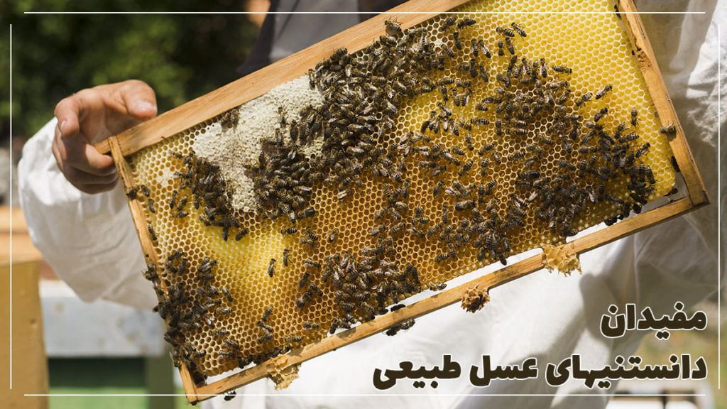 Everything-you-need-to-know-about-honey